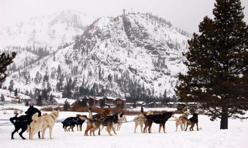 Mammoth Mountain Dogsledding